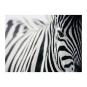 PJÄTTERYD Picture, zebra - 301.404.38