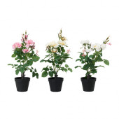 FEJKA Artificial potted plant, Rose assorted species plants - 302.341.73
